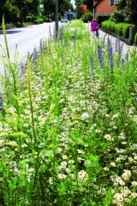 Anstatt einer eintönigen Cotoneaster-Fläche bereichert dieser Blütenteppich das Verkehrsbegleitgrün in Bad Saulgau.