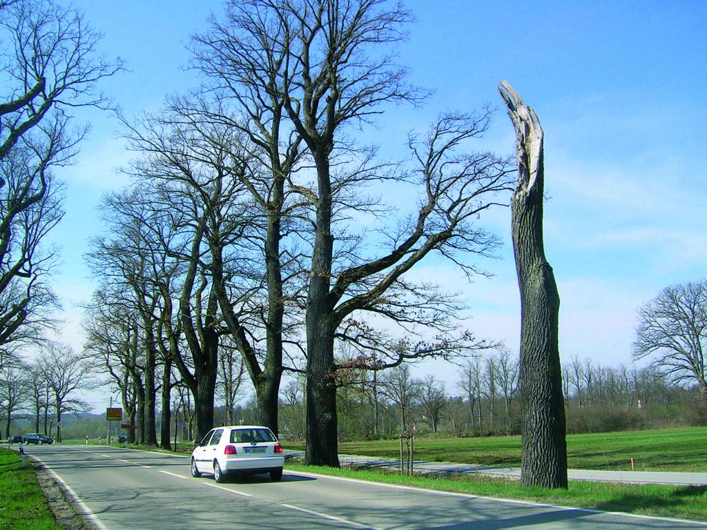 Straßenbäume oder Alleen in Parkanlagen  müssen verkehrssicher sein. Fotos: Hilsberg