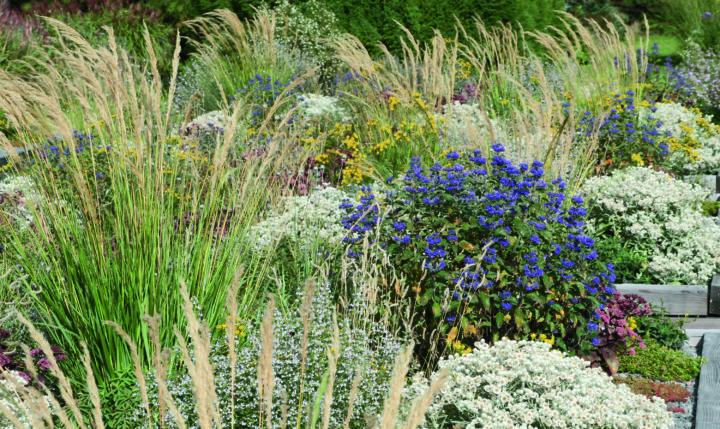 Staudengärtner können mit ihrer Fachkenntnis die Kunden bei der Gartengestaltung mit Stauden unterstützen.  Foto: Panitz