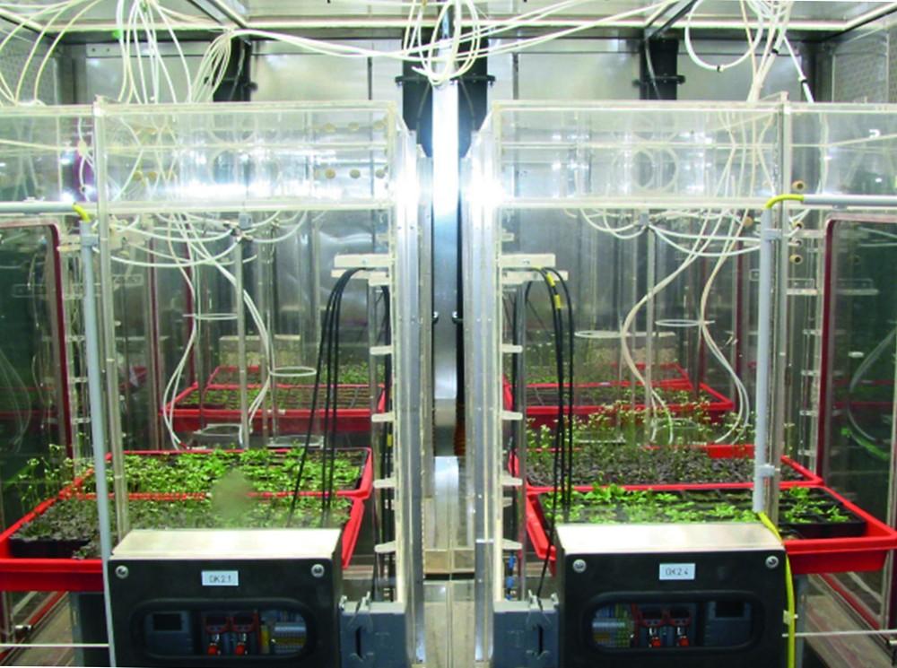 Expositionskammern für die Experimente zur NO-Behandlung.Steigende NO-Konzentration – mehr Wachstum (Arabidopsis).