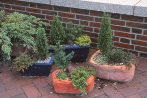 Zwerg-Gehölze sind im Sommer wie im Winter ein schöner Blickfang und lassen Miniaturlandschaften in Kisten und Kübeln entstehen. Foto: GMH/GBV
