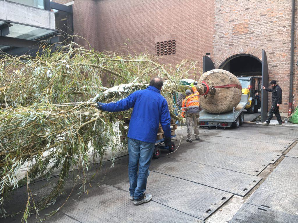 Beim Transport von Bäumen kommt es manchmal auf viel Augenmaß und Fingerspitzengefühl an. Fotos: LvE