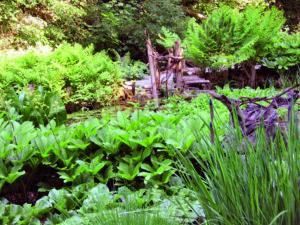 Tropische Üppigkeit am kühlen, absonnigen Gewässerrand mit Straußenfarn (Matteucia orientalis), Königsfarn (Osmunda regalis) , Scheinkalla (Lysichiton americanus), Schaublatt (Rodgersia pinnata) und Schwertlilie (Iris sibirica). Für derartige Bilder muss nicht nur die dauernde Wasserversorgung gewährleistet sein, nährstoffreicher, humoser Lehmboden und eine milde und luftfeuchte Lage in diesem Tal begünstigen das Wachstum und die Ausfärbung der Blätter. Foto: Bettina Jaugstetter     Tropische Üppigkeit am kühlen, absonnigen Gewässerrand. Hier muss nicht nur die dauernde Wasserversorgung gewährleistet sein, nährstoffreicher, humoser Lehmboden und eine milde und luftfeuchte Lage in diesem Tal begünstigen das Wachstum und die Ausfärbung der Blätter. Foto: Bettina Jaugstetter