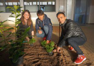 Die Willkommenslotsin Özge Acar assistiert Walid Nawabi (17) und Fahim Mohammed (18) beim Pflanzen von Bodendeckern.