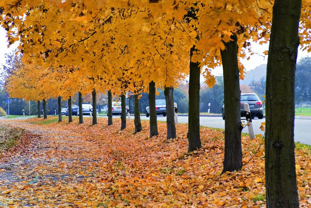 Die Nutzung von Herbstlaub könnte helfen, Kosten zu sparen. Foto: imago/ Blickwinkel