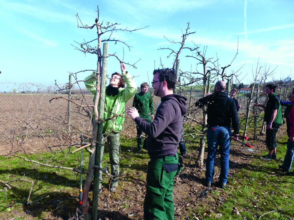Praktische Übungen etwa zum Baumschnitt bereichern den Unterricht. Fotos: LVG Erfurt